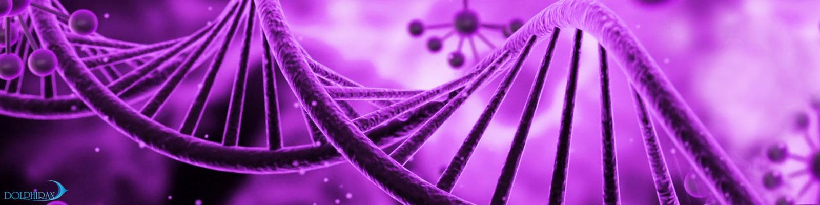 محلول آکواریوم pink fusion و purple helix حاوی جلبک های آهکی