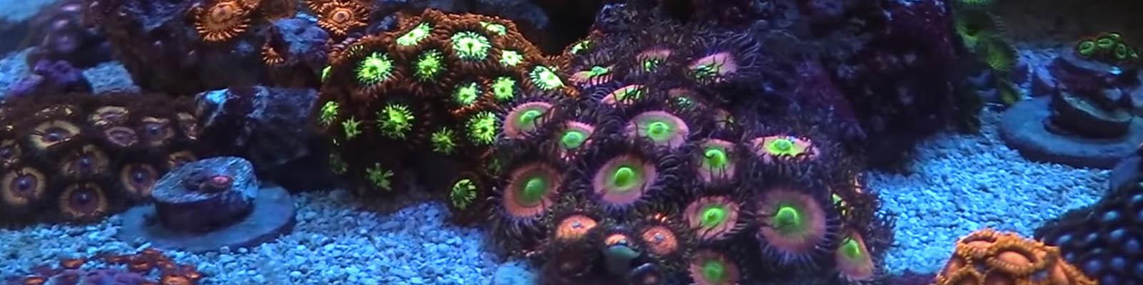 نحوه ي قرنطينه كردن مرجان ها و بي مهرگان