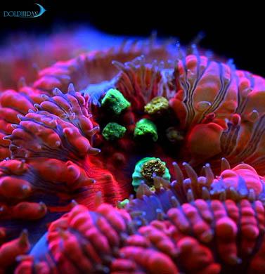 تغذیه مرجان ها