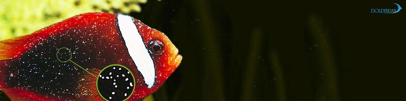 بیماری ماهیان آب شور (شناخت) - بخش اول
