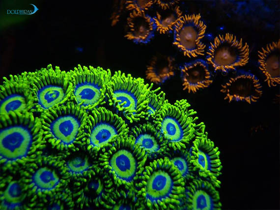 از اجازه ندادن صادرات مرجان تا پرورش مرجان