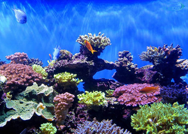 نخستين بيانيه ي رسمي از سوی سازمان شیلات اندونزی مبنی بر منع صادرات مرجان ها
